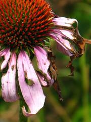Neglected Flower